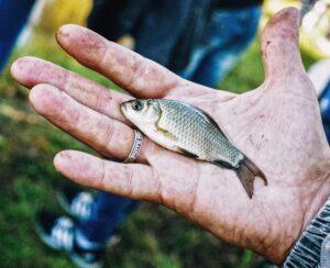 Lille fisk fanget med mikrofiskeri