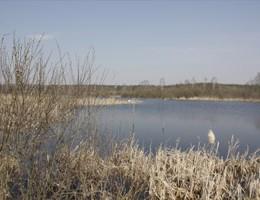 Årets gang ved fiskesøen: Marts
