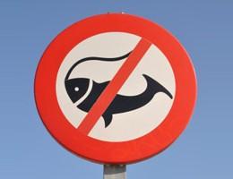Fredningstider for fisk i ferskvand