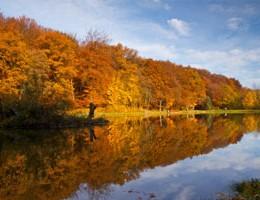 Årets gang ved fiskesøen: November