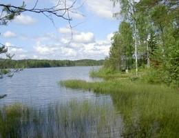 Årets gang ved fiskesøen: Juli