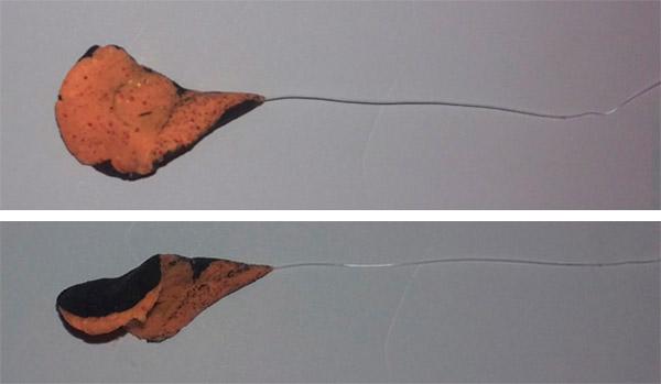PowerBait formet som dråbe med skrue