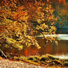 Efterår i ørredsøen – tips til efterårsfiskeri i Put & Take